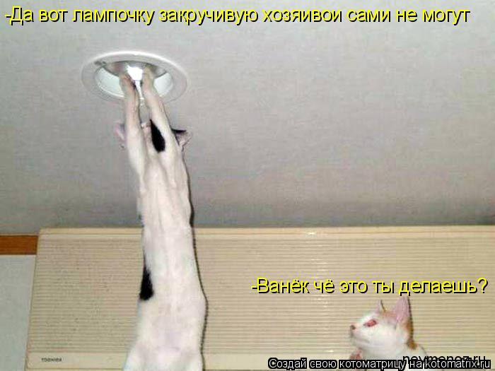 Котоматрица: -Ванёк чё это ты делаешь? -Да вот лампочку закручивую хозяивои сами не могут
