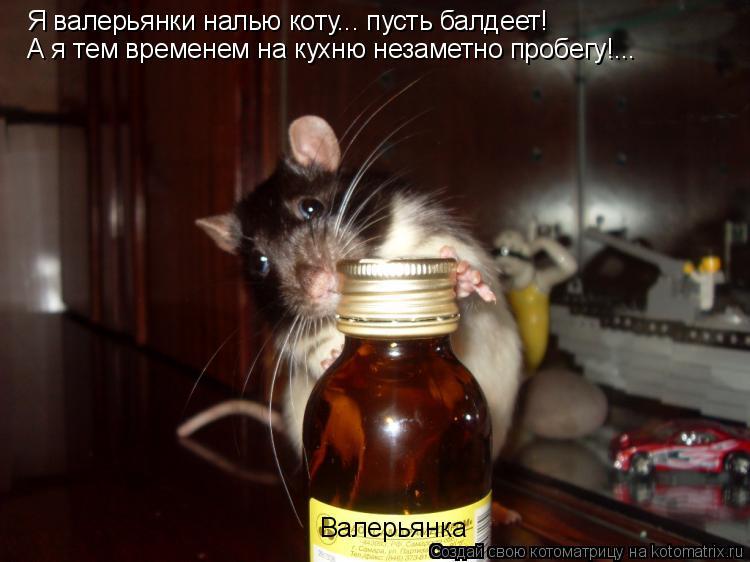 Котоматрица: Я валерьянки налью коту... пусть балдеет! А я тем временем на кухню незаметно пробегу!... Валерьянка