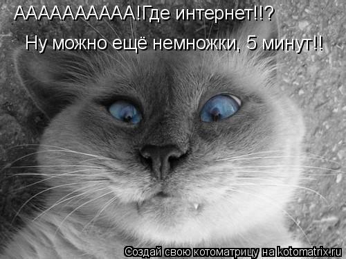 Котоматрица: АААААААААА!Где интернет!! АААААААААА!Где интернет!!? Ну можно ещё немножки, 5 минут!!
