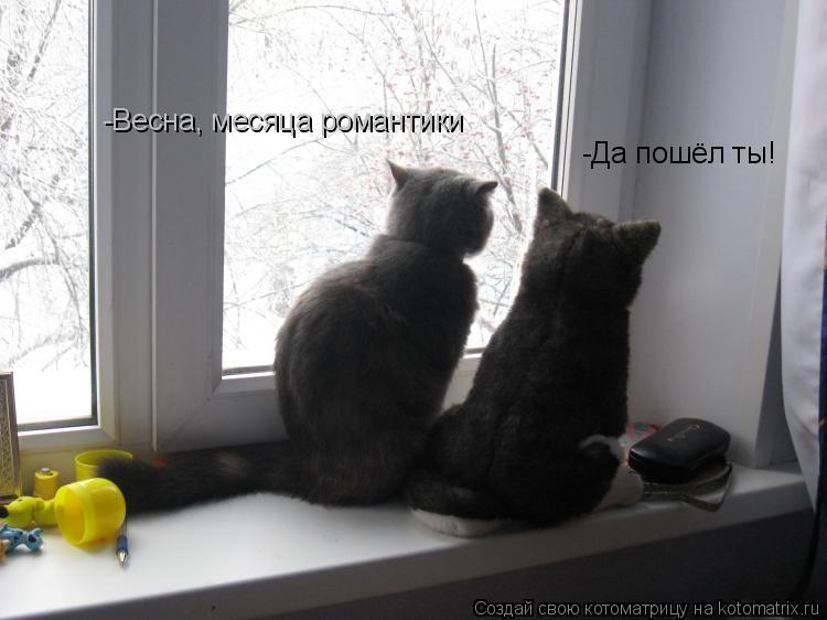 Котоматрица: -Весна, месяца романтики -Да пошёл ты!