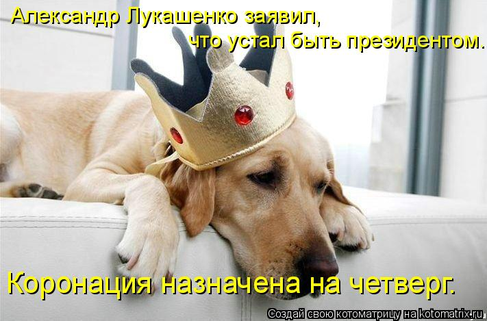 Котоматрица: Александр Лукашенко заявил, что устал быть президентом. Коронация назначена на четверг.