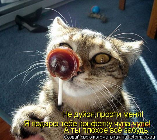 Котоматрица: Я подарю тебе конфетку чупа-чупс!  Не дуйся,прости меня! А ты плохое всё забудь...