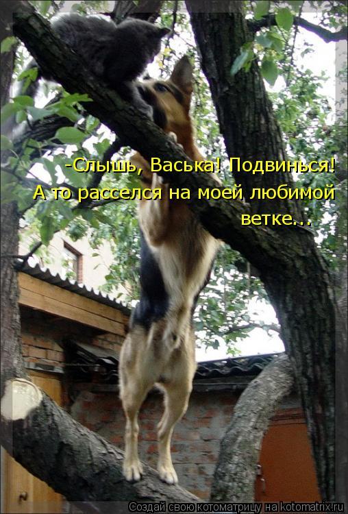 Котоматрица: -Слышь, Васька! Подвинься! А то расселся на моей любимой ветке...