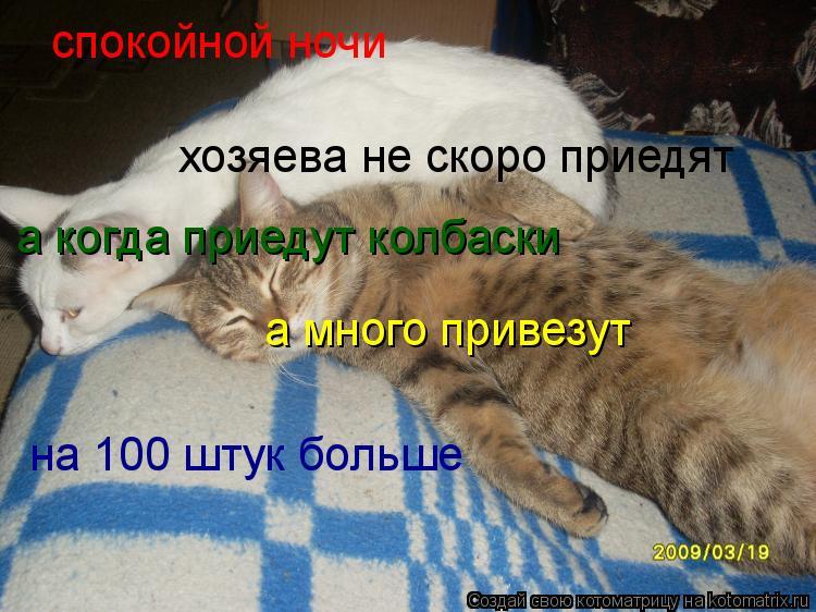 Котоматрица: спокойной ночи хозяева не скоро приедят а когда приедут колбаски а много привезут на 100 штук больше