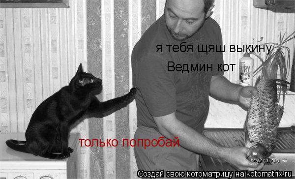 Котоматрица: я тебя щяш выкину Ведмин кот только попробай