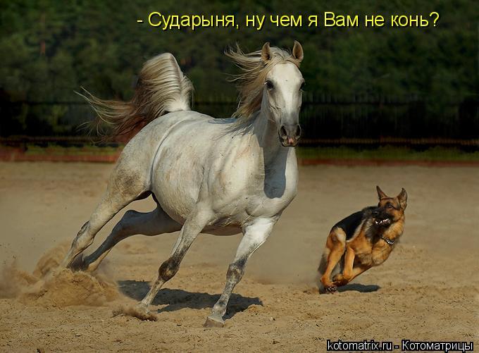 Котоматрица: - Сударыня, ну чем я Вам не конь?