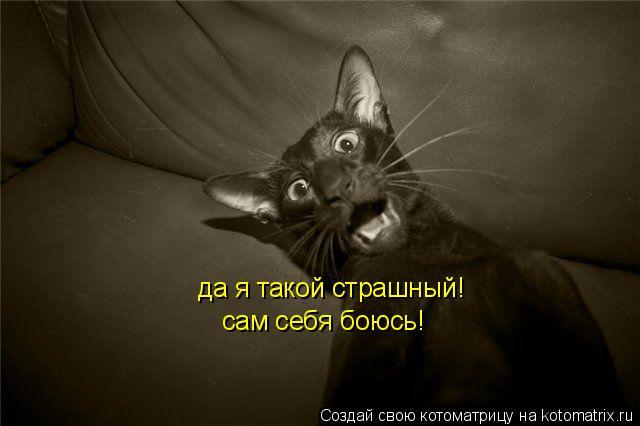 Котоматрица: да я такой страшный! сам себя боюсь!