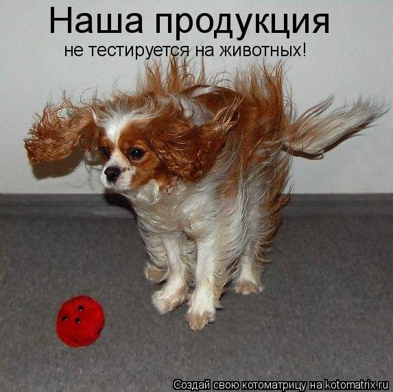 Котоматрица: Наша продукция не тестируется на животных!