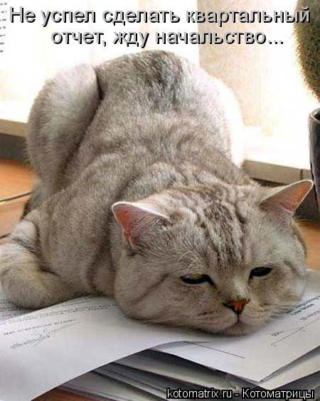 Котоматрица: Не успел сделать квартальный   отчет, жду начальство...