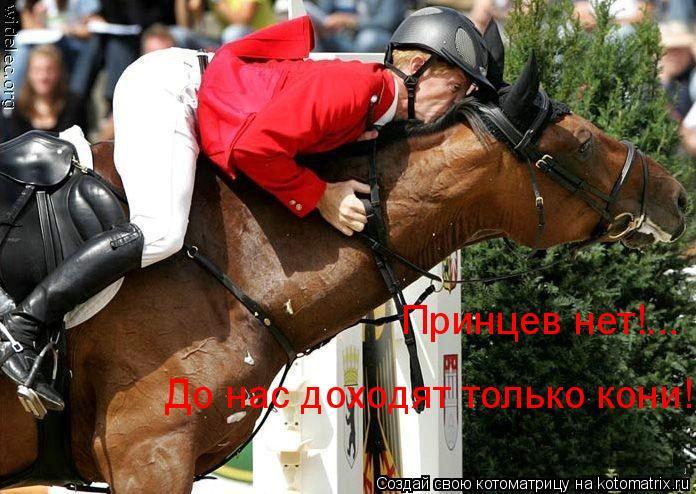 Котоматрица: Принцев нет!... До нас доходят только кони!