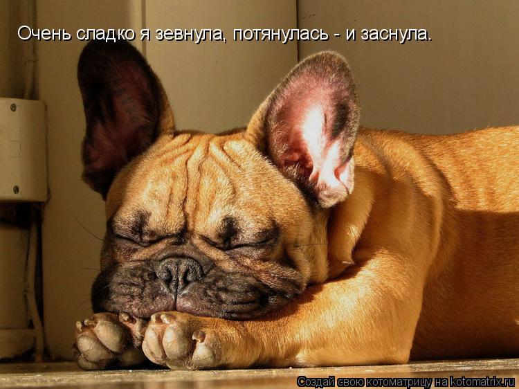 Котоматрица: Очень сладко я зевнула, потянулась - и заснула.