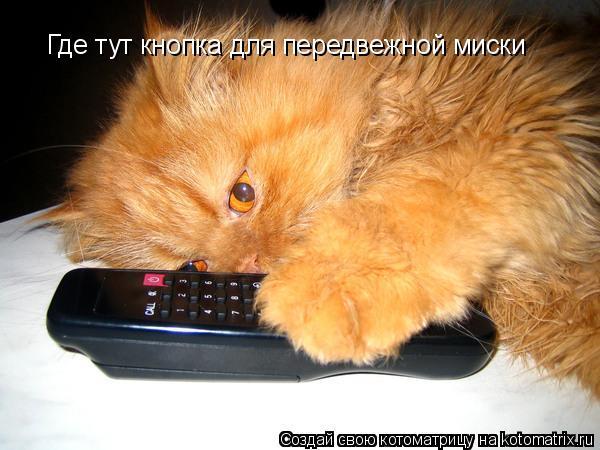 Котоматрица: Где тут кнопка для передвежной миски