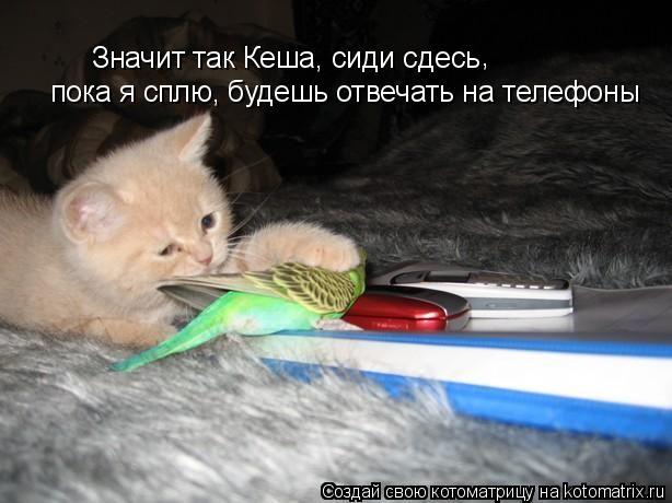 Котоматрица: Значит так Кеша, сиди сдесь  пока я сплю, будешь отвечать на телефоны ,