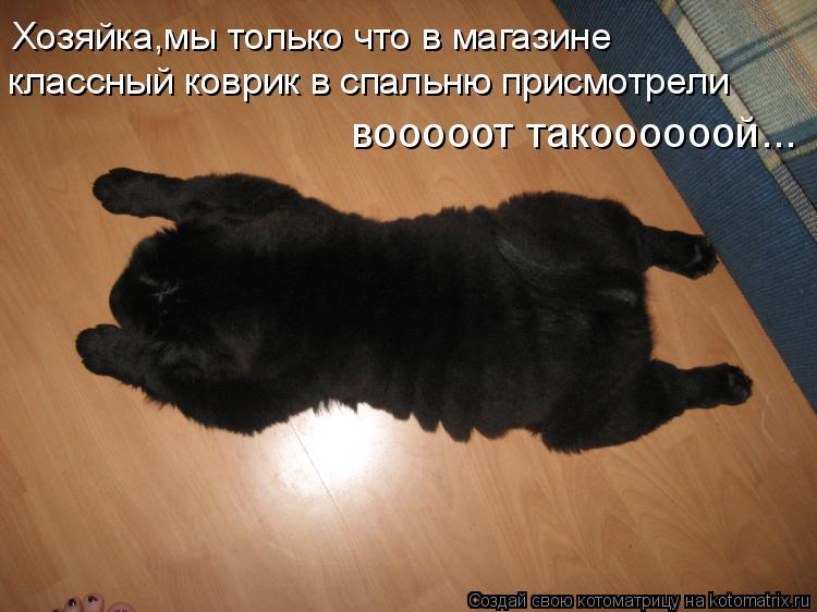 Котоматрица: Хозяйка,мы только что в магазине  классный коврик в спальню присмотрели вооооот такоооооой...