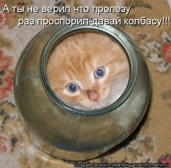 Котоматрица: раз проспорил-давай колбасу!!! А ты не верил что пролезу