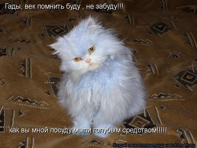 Котоматрица: Гады, век помнить буду , не забуду!!! как вы мной посуду мыли голубым средством!!!!!