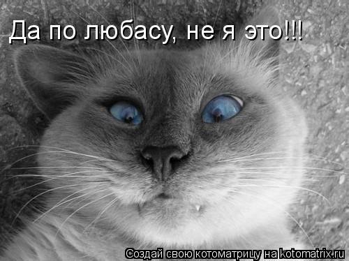 Котоматрица: Да по любасу, не я это!!!