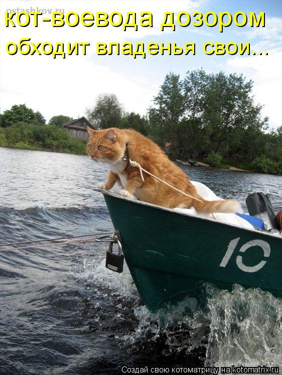 Котоматрица: кот-воевода дозором обходит владенья свои...