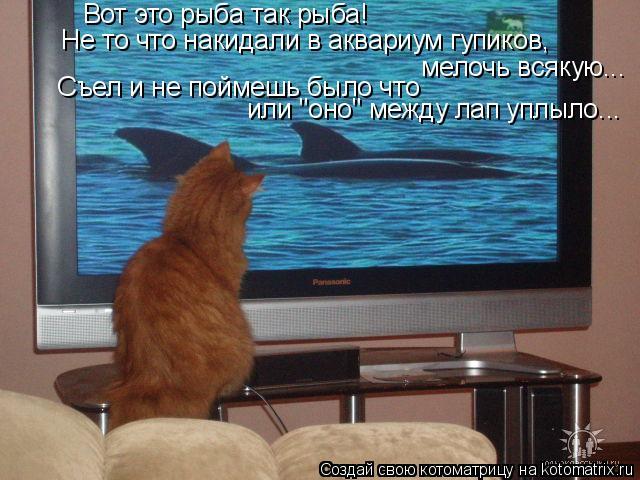 """Котоматрица: Вот это рыба так рыба! Не то что накидали в аквариум гупиков, мелочь всякую... Съел и не поймешь было что  или """"оно"""" между лап уплыло..."""