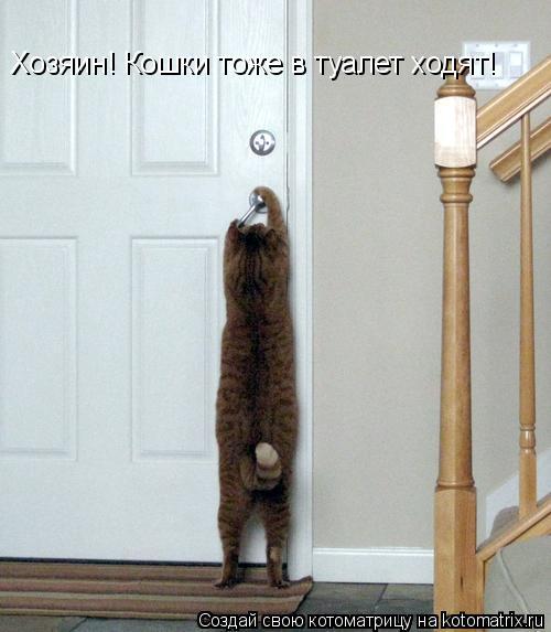 Котоматрица: Хозяин! Кошки тоже в туалет ходят!