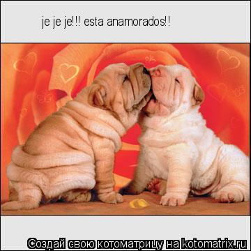 Котоматрица: je je je!!! esta anamorados!!