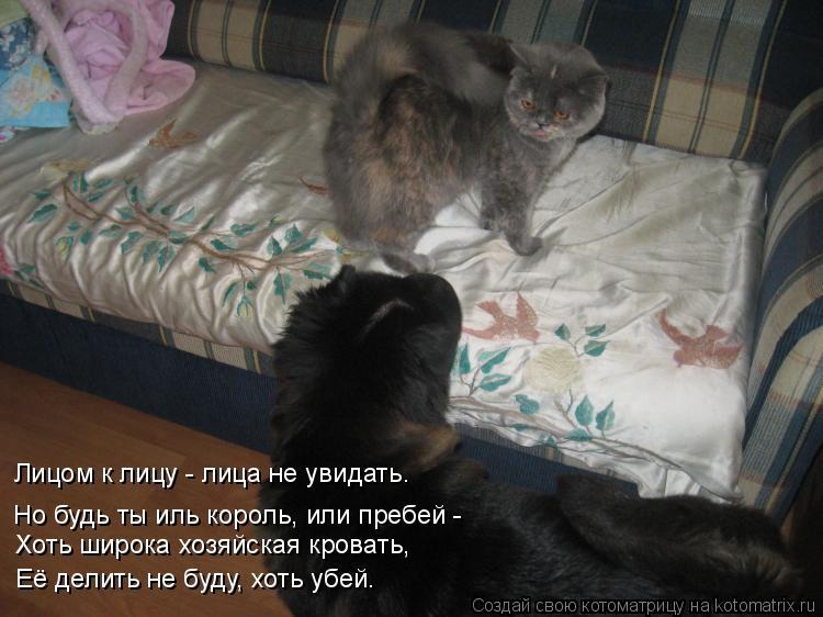 Котоматрица: Лицом к лицу - лица не увидать. Хоть широка хозяйская кровать, Её делить не буду, хоть убей. Но будь ты иль король, или пребей -