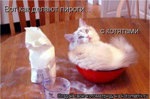 Котоматрица: Вот как делают пироги... с котятами