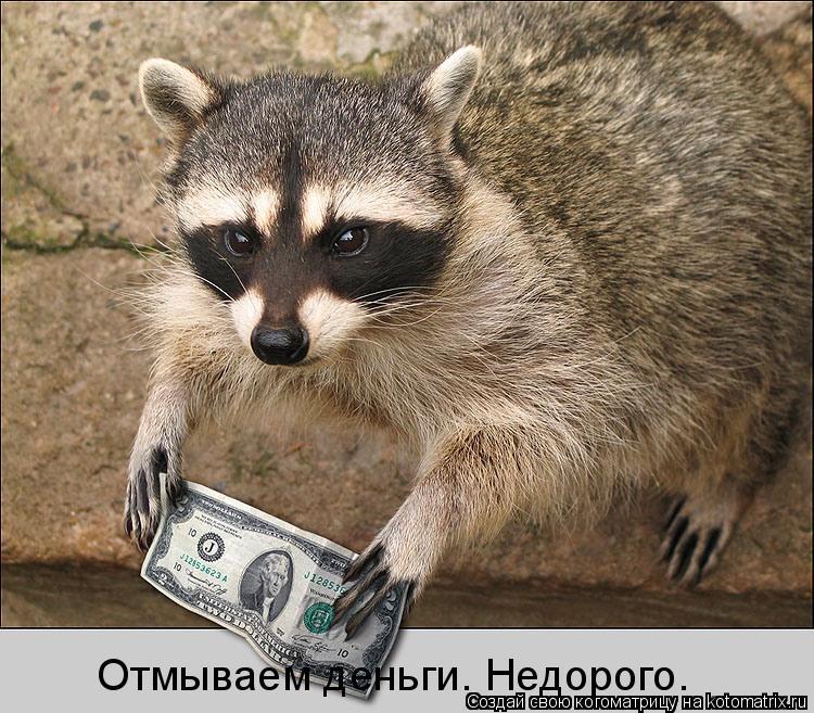 Котоматрица: Отмываем деньги. Недорого.