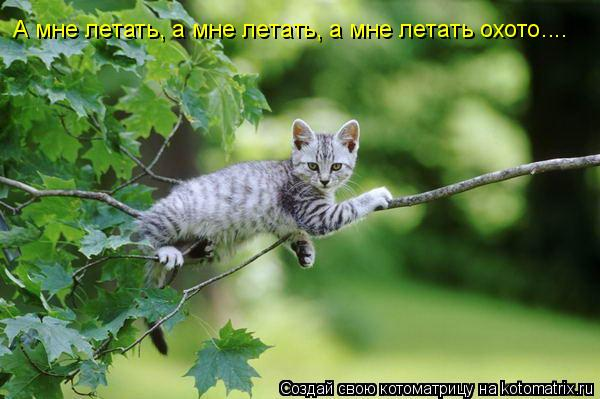 Котоматрица: А мне летать, а мне летать, а мне летать охото....
