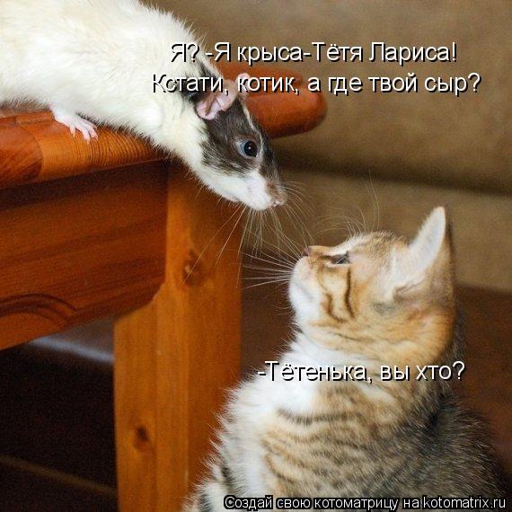 Котоматрица: -Тётенька, вы хто? Я? -Я крыса-Тётя Лариса! Кстати, котик, а где твой сыр?