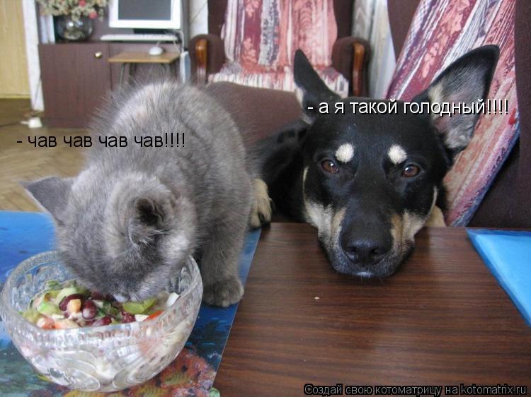 Котоматрица: - а я такой голодный!!!! - чав чав чав чав!!!!