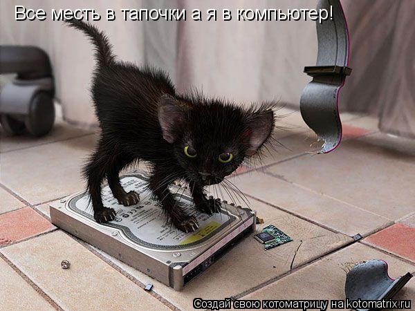 Котоматрица: Все месть в тапочки а я в компьютер!