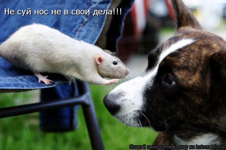 Котоматрица: Не суй нос не в свои дела!!!