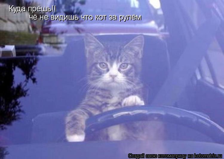 Котоматрица: Куда прёшь!! чё не видишь что кот за рулём
