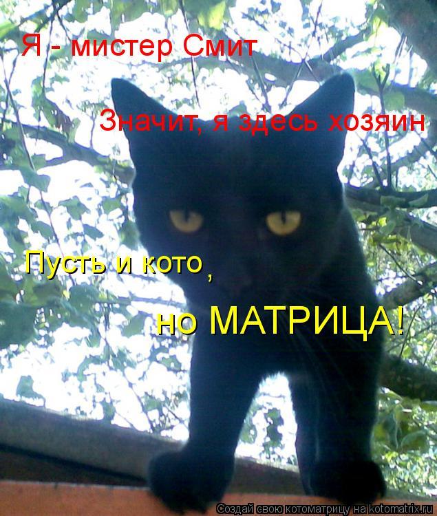 Котоматрица: Я - мистер Смит Значит, я здесь хозяин Пусть и кото , но МАТРИЦА!