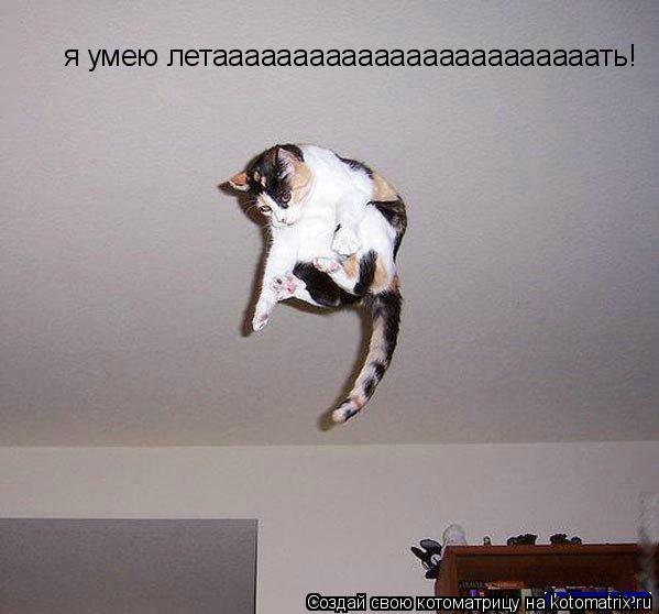 Котоматрица: я умею летаааааааааааааааааааааааать!