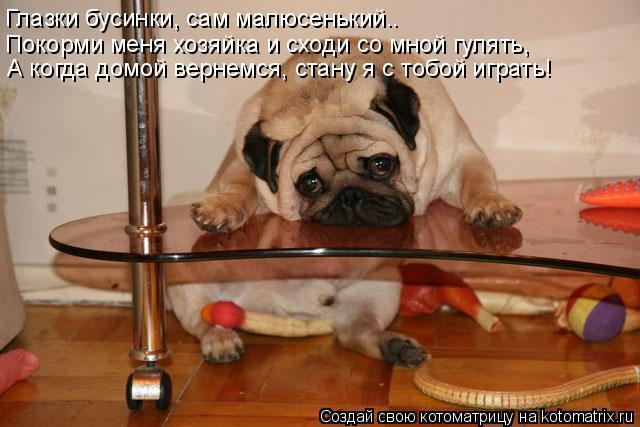 Котоматрица: Глазки бусинки, сам малюсенький.. Покорми меня хозяйка и сходи со мной гулять, А когда домой вернемся, стану я с тобой играть!
