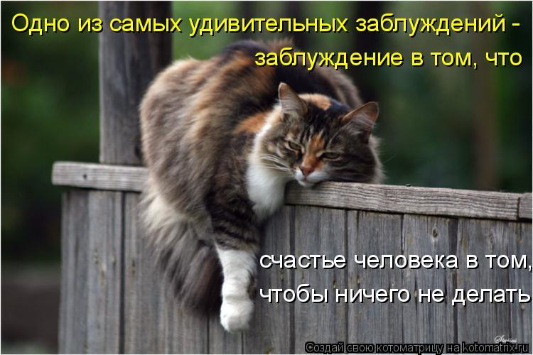 Котоматрица: Одно из самых удивительных заблуждений - заблуждение в том, что счастье человека в том,  чтобы ничего не делать