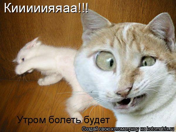 Котоматрица: Утром болеть будет Кииииияяаа!!!