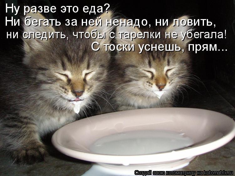 Котоматрица: Ну разве это еда? ни следить, чтобы с тарелки не убегала! Ни бегать за ней ненадо, ни ловить, С тоски уснешь, прям...