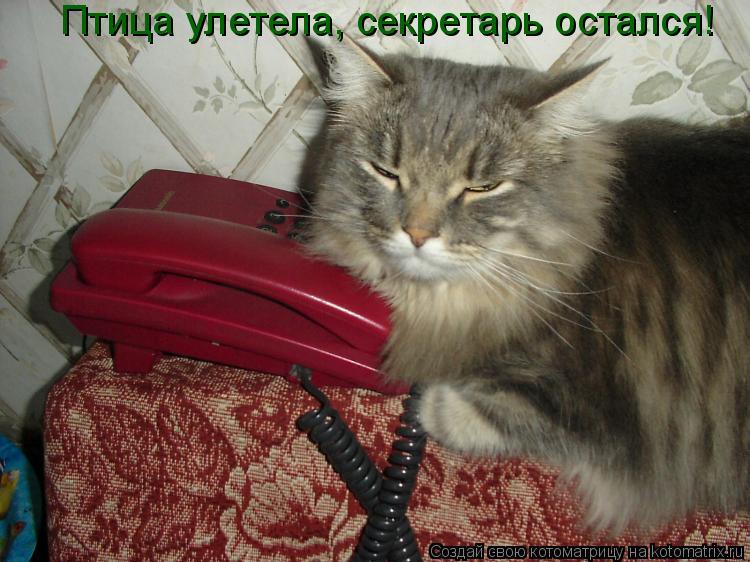 Котоматрица: Птица улетела, секретарь остался!