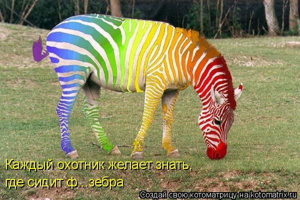 Котоматрица: Каждый охотник желает знать, где сидит ф...зебра