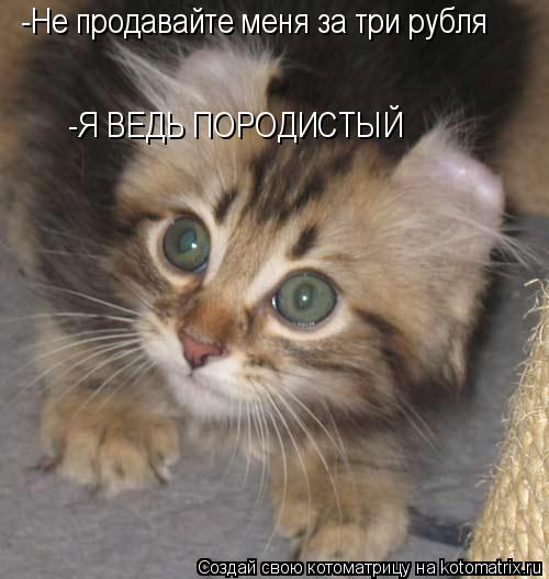 Котоматрица: -Не продавайте меня за три рубля -Я ВЕДЬ ПОРОДИСТЫЙ
