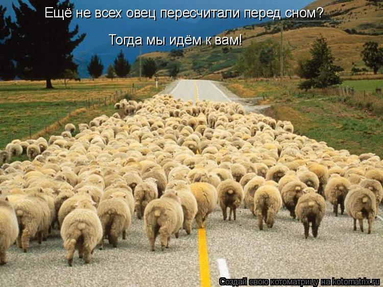 Котоматрица: Ещё не всех овец пересчитали перед сном? Тогда мы идём к вам!