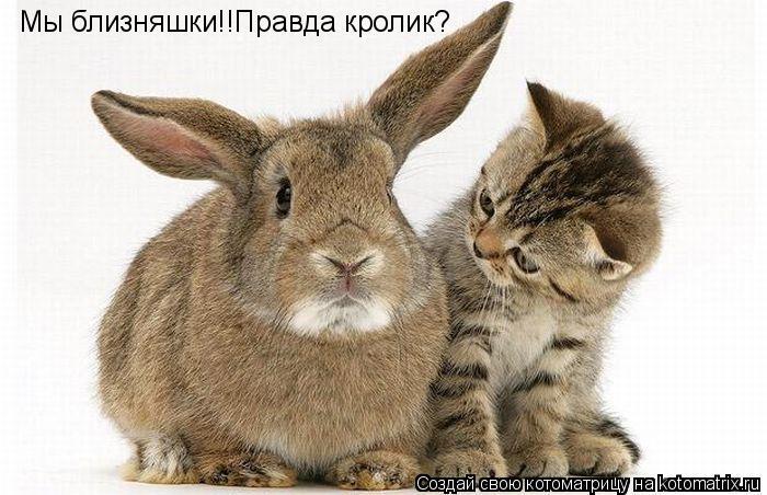 Котоматрица: Мы близняшки!!Правда кролик?