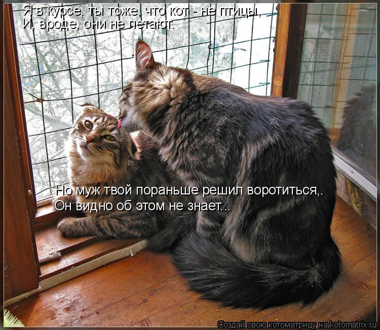 Котоматрица: Я в курсе, ты тоже, что кот - не птицы, И, вроде, они не летают. Но муж твой пораньше решил воротиться,. Он видно об этом не знает...