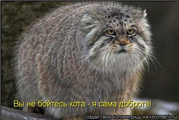 Котоматрица: Вы не бойтесь кота - я сама доброта!
