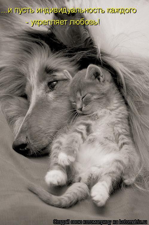 Котоматрица: ...и пусть индивидуальность каждого   - укрепляет любовь!