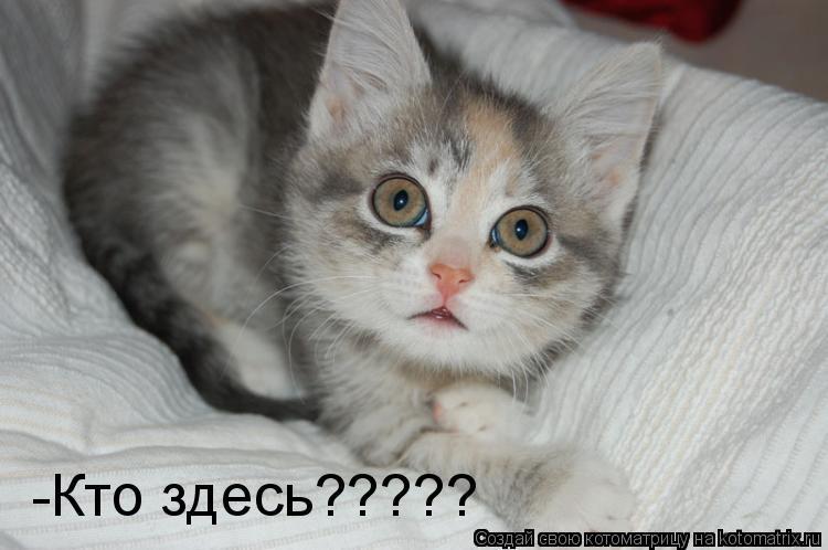 Котоматрица: -Кто здесь?????