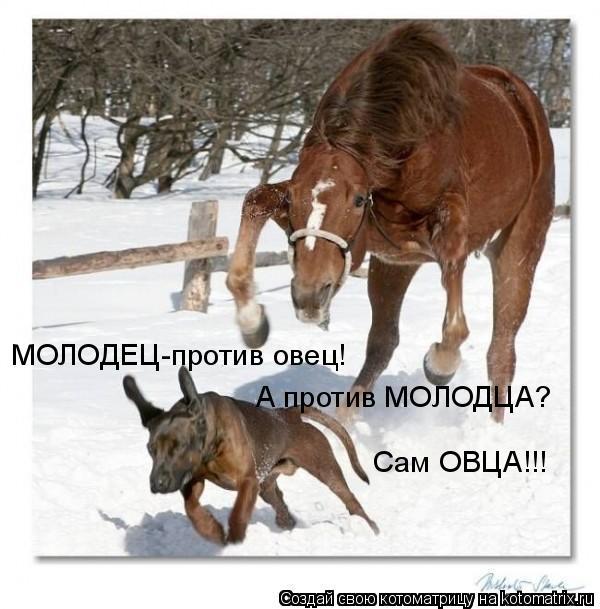 Котоматрица: МОЛОДЕЦ-против овец! А против МОЛОДЦА? Сам ОВЦА!!!